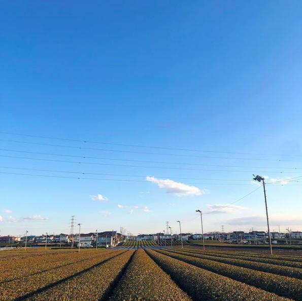 2月頃の茶畑