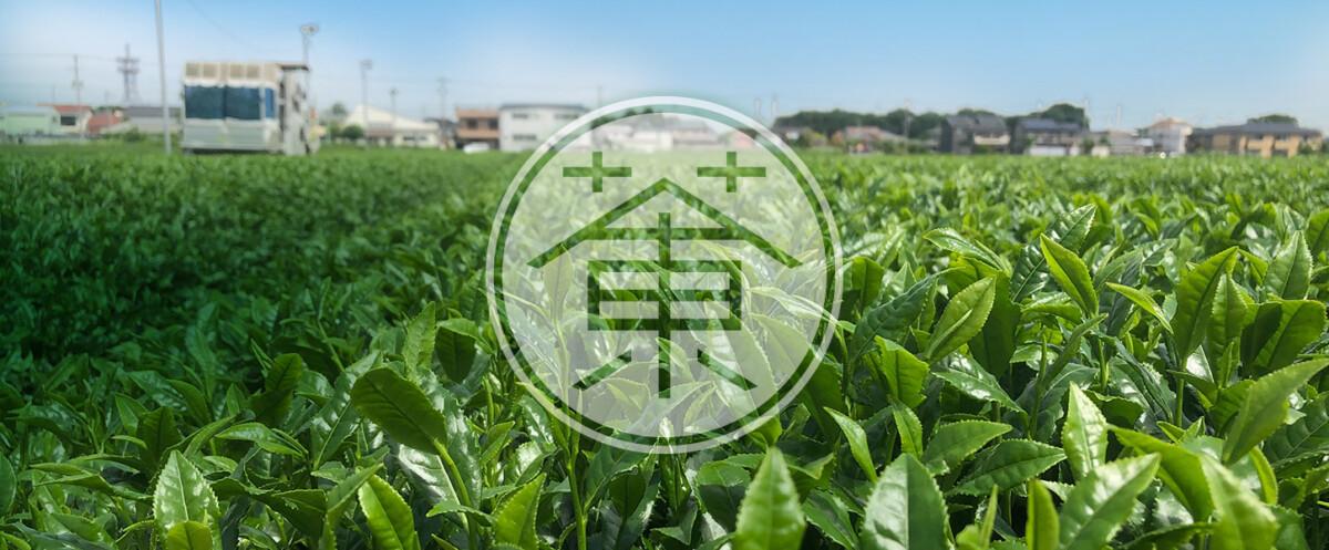 栗原園の茶畑